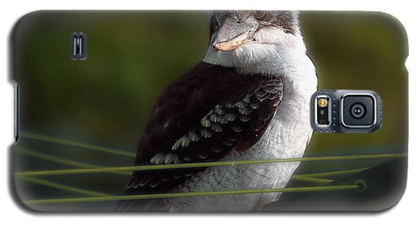 Galaxy S5 Case featuring the photograph Kookaburra Hoists On The Hills by Vicki Ferrari