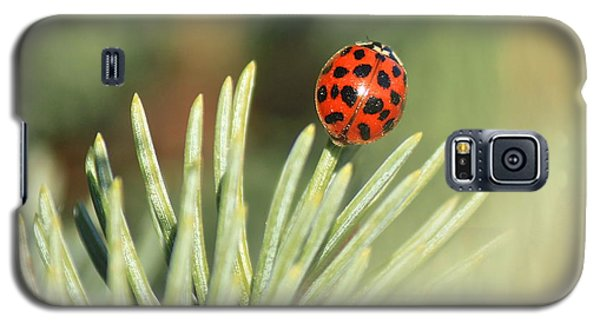 Galaxy S5 Case featuring the photograph Lady Beetle On A Needle by Penny Meyers