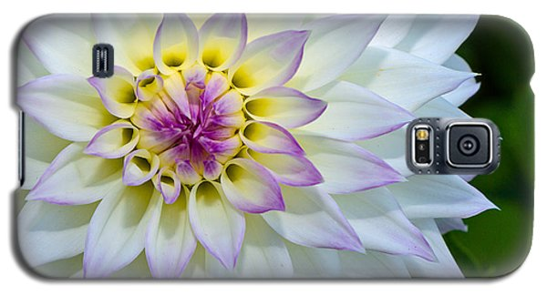 Galaxy S5 Case featuring the photograph Lady Dahlia by Ken Stanback