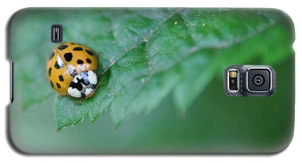 Ladybug Posing On Astilbe Leaf Galaxy S5 Case