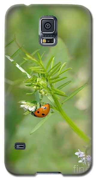 Galaxy S5 Case featuring the photograph Ladybug by Tannis  Baldwin