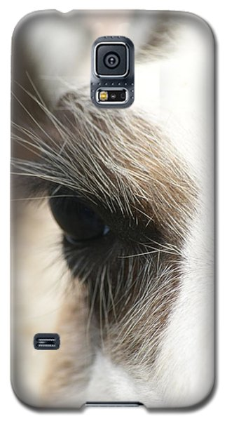 Galaxy S5 Case featuring the photograph Lama by Heidi Poulin