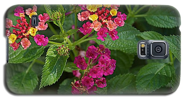 Galaxy S5 Case featuring the photograph Lantana by Joseph Yarbrough
