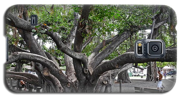 Galaxy S5 Case featuring the photograph Largest Banyan Tree In The Usa by Kirsten Giving