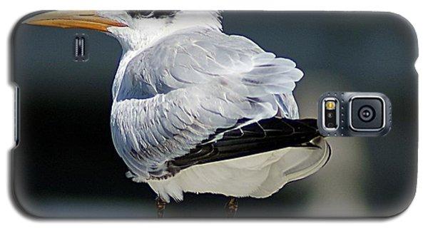 Larry Fine Reincarnated Galaxy S5 Case by Joe Faherty