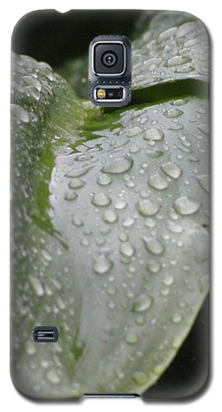 Galaxy S5 Case featuring the photograph Leafy Greens by Tiffany Erdman