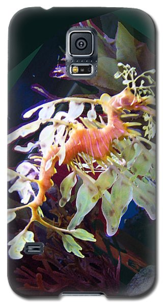 Galaxy S5 Case featuring the photograph Leafy Sea Dragon by Ginny Schmidt