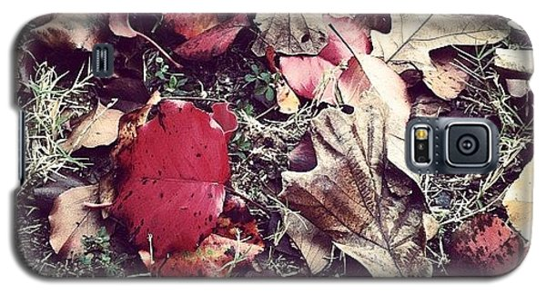 Cause Galaxy S5 Case - Leaves Of Color by Derek M