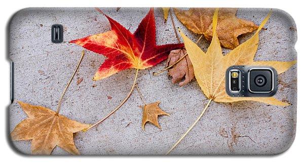 Leaves On The Sidewalk Galaxy S5 Case