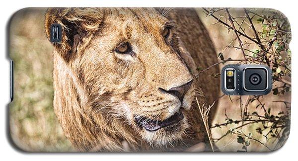 Lioness Hiding Galaxy S5 Case