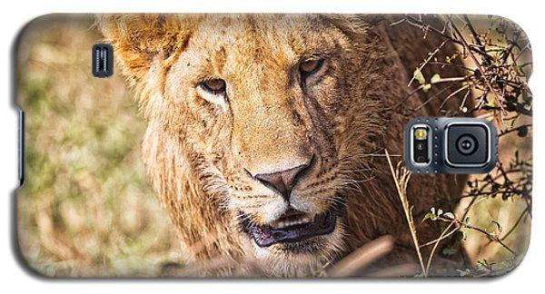 Lioness Galaxy S5 Case