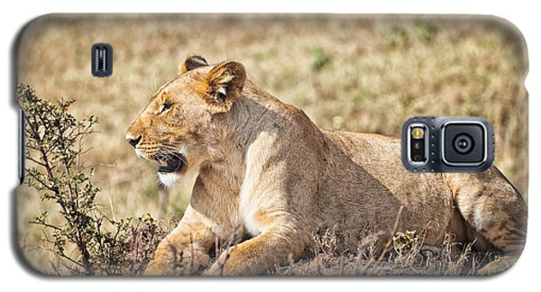 Lioness Relaxing Galaxy S5 Case