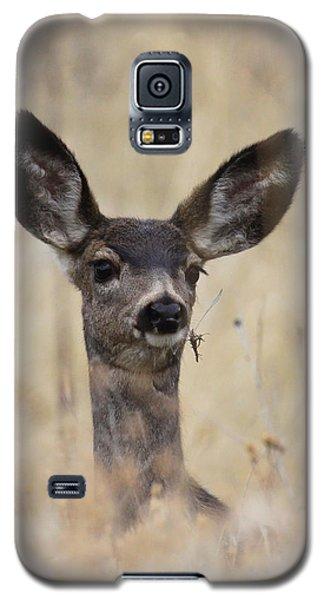 Little Fawn Galaxy S5 Case by Steve McKinzie