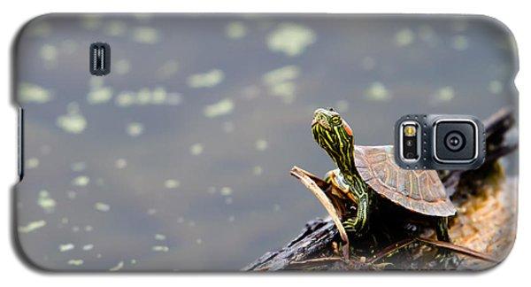 Little Guy Galaxy S5 Case