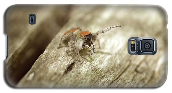 Galaxy S5 Case featuring the photograph Little Jumper In Sepia by JD Grimes