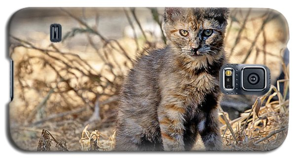 Galaxy S5 Case featuring the photograph Lone Feral Kitten by Chriss Pagani