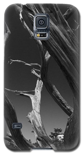 Galaxy S5 Case featuring the photograph Lone Tree by David Gleeson