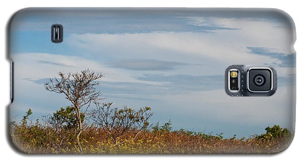 Galaxy S5 Case featuring the photograph Lone Tree On The Rhode Island Coast by Nancy De Flon