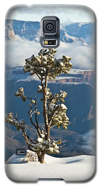Lonely Tree Over The Grand Canyon Galaxy S5 Case
