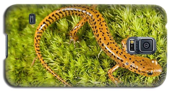 Longtail Salamander Eurycea Longicauda Galaxy S5 Case by Jack Goldfarb