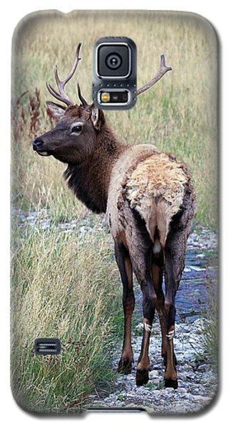 Looking Back Bull Galaxy S5 Case by Steve McKinzie