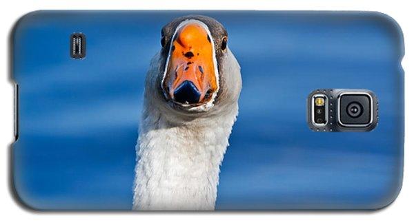 Looking Straight Ahead Galaxy S5 Case by Ann Murphy