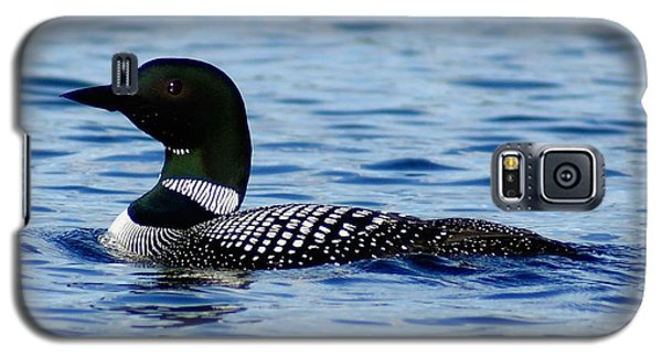 Galaxy S5 Case featuring the photograph Loon 5 by Steven Clipperton