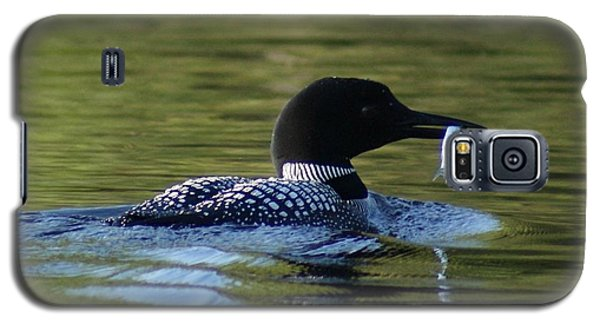 Galaxy S5 Case featuring the photograph Loon With Minnow by Steven Clipperton
