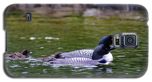 Galaxy S5 Case featuring the photograph Loons With Twins 3 by Steven Clipperton