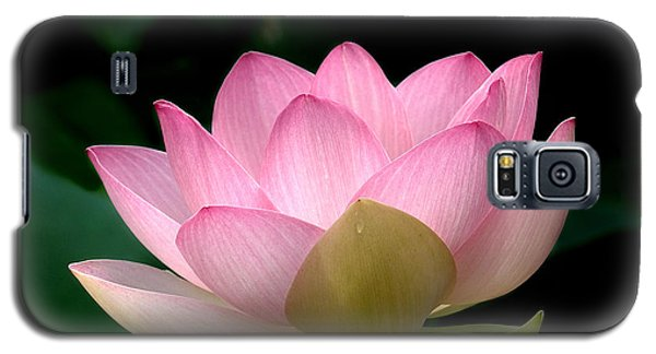 Lotus Beauty--blushing Dl003 Galaxy S5 Case