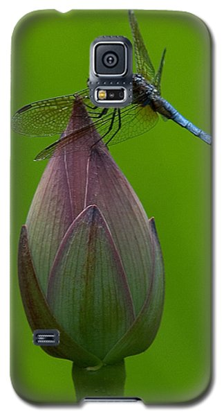Lotus Bud And Blue Dasher Dragonfly Dl007 Galaxy S5 Case