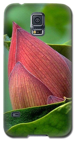 Lotus Bud--bud In A Blanket Dl049 Galaxy S5 Case