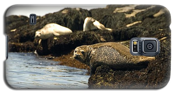 Lounging Seals Galaxy S5 Case
