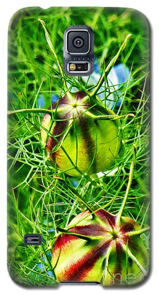 Galaxy S5 Case featuring the photograph Love In A Mist by Steve Taylor