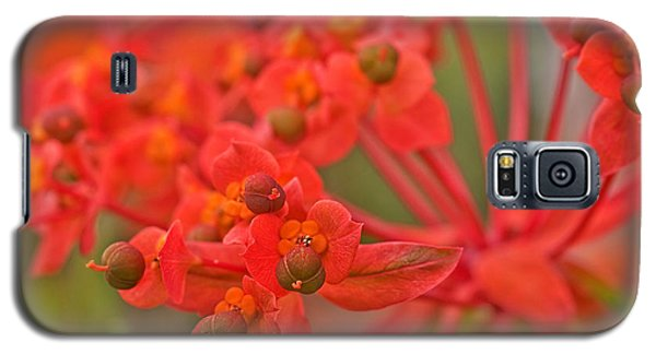 Galaxy S5 Case featuring the photograph Macro Euphorbia Fireglow Plant by Valerie Garner