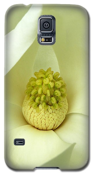 Galaxy S5 Case featuring the photograph Magnolia Grandiflora by Deborah Smith