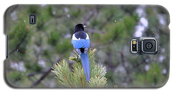 Magpie In Snow Galaxy S5 Case