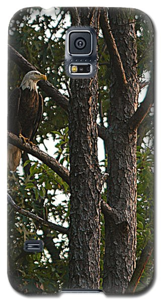 Galaxy S5 Case featuring the photograph Majestic Bald Eagle by Clayton Bruster
