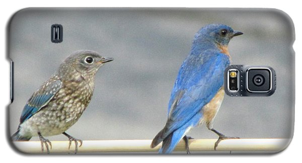 Galaxy S5 Case featuring the photograph Male And Female Bluebirds On A Perch by Betty Pieper