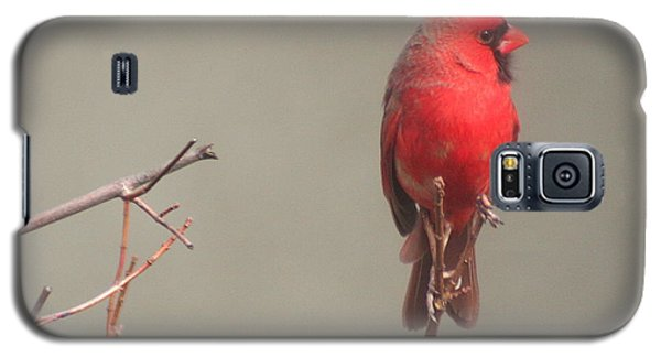Galaxy S5 Case featuring the photograph Male Cardinal On A Branch by Laurel Talabere