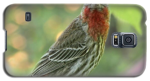 Galaxy S5 Case featuring the photograph Male House Finch by Debbie Portwood