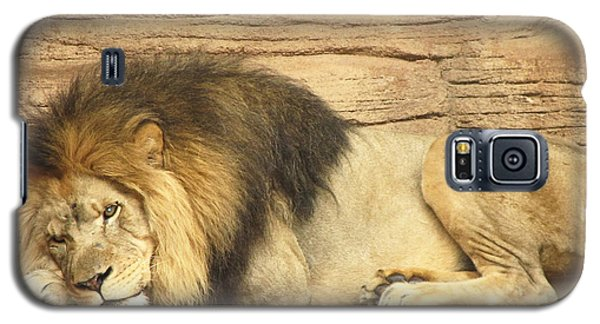 Male Lion Resting Galaxy S5 Case