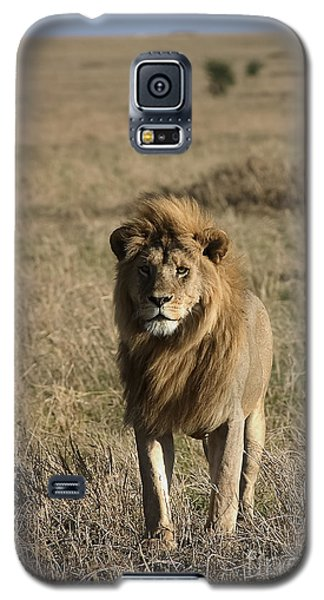Male Lion's Gaze Galaxy S5 Case by Darcy Michaelchuk