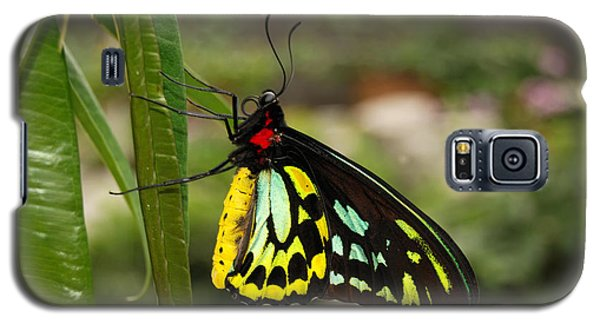 Galaxy S5 Case featuring the photograph Male New Guinea Birdwing Butterfly by Eva Kaufman