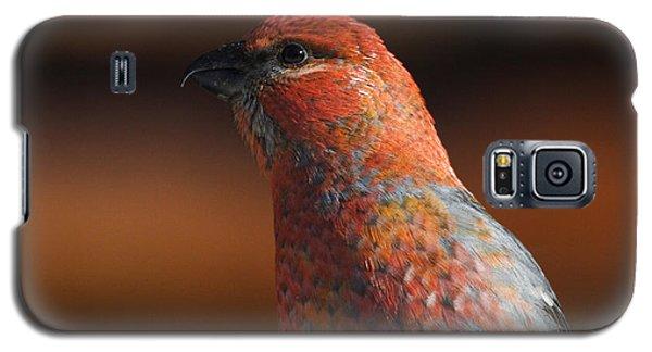 Male Pine Grosbeak Galaxy S5 Case