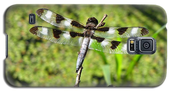 Galaxy S5 Case featuring the photograph Male Twelve-spotted Dragonfly by Maciek Froncisz