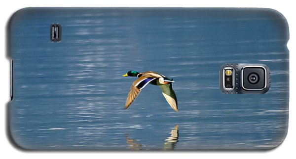 Galaxy S5 Case featuring the photograph Mallard Drake. by Mitch Shindelbower