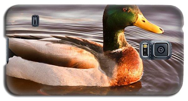 Mallard Duck At Sunset Galaxy S5 Case