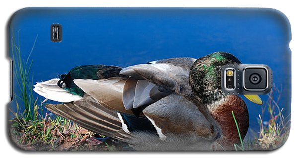 Galaxy S5 Case featuring the photograph Mallard On River Bank by Eva Kaufman
