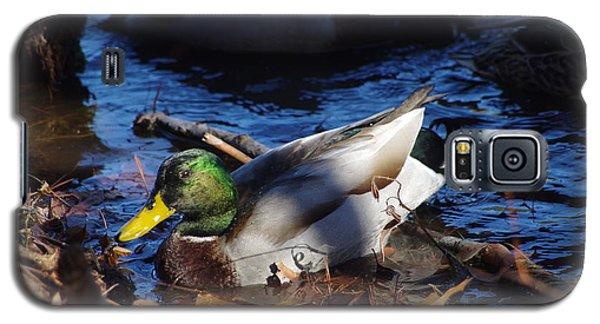 Galaxy S5 Case featuring the photograph Mallard by Tannis  Baldwin